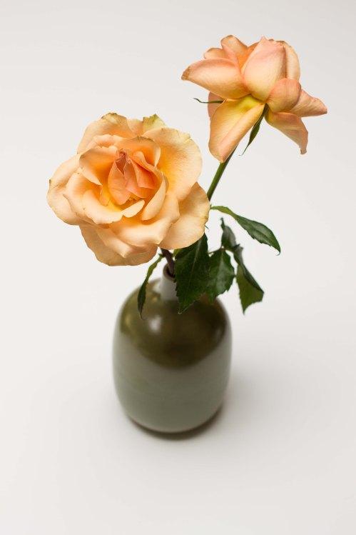 still blooming roses