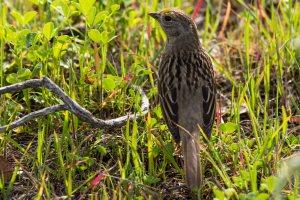sparrow me ~ d nelson