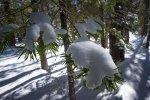snowy branch ~ d nelson