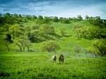 beholding horses