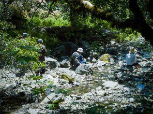creek meditations
