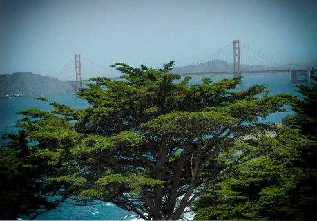 cypress' golden gate view