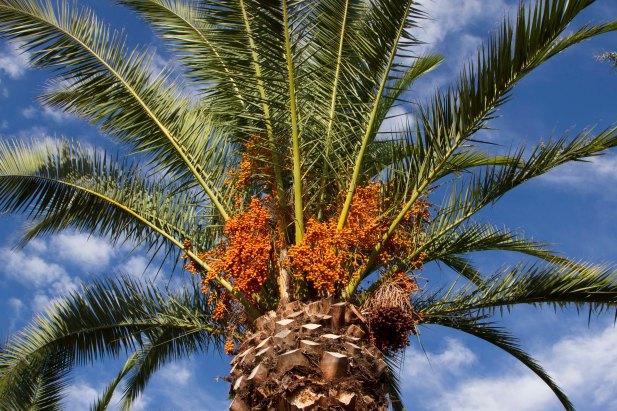 palms brush clouds