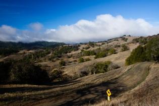 foggy hills & oaks