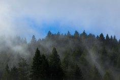 fog green & blue