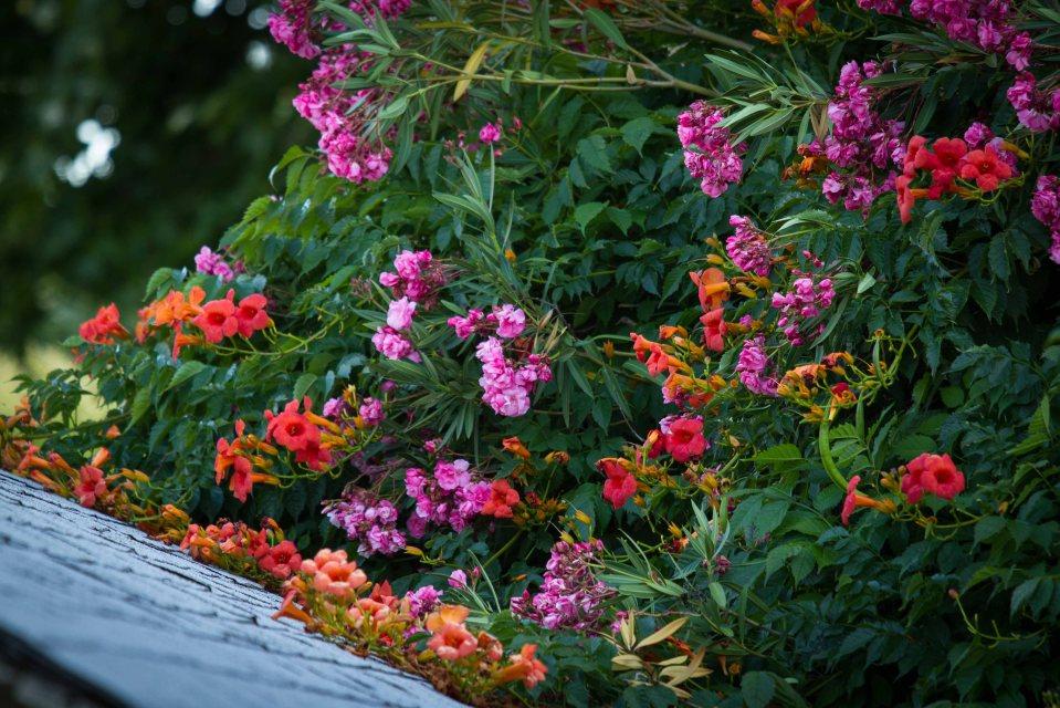 flowers often seem nicer on the other side ~d nelson