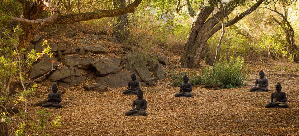 in the buddha field