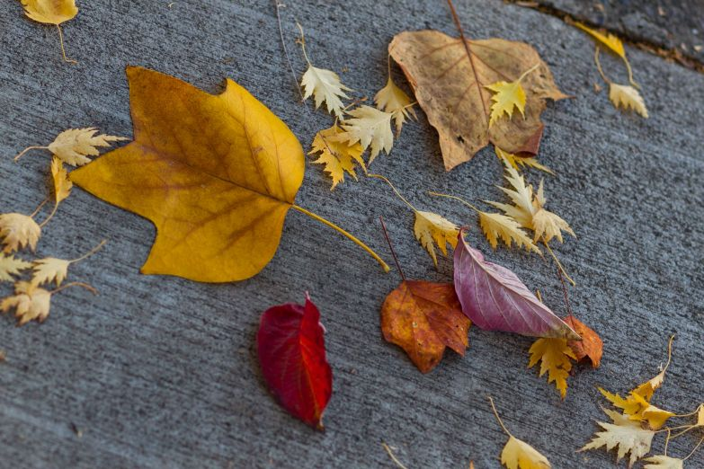 leaves laying
