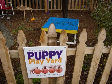 puppy play yard