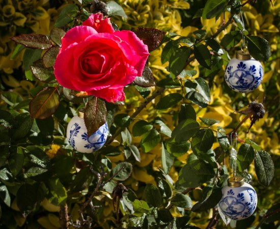 sparkling red rose with delft bulbs ~ d nelson