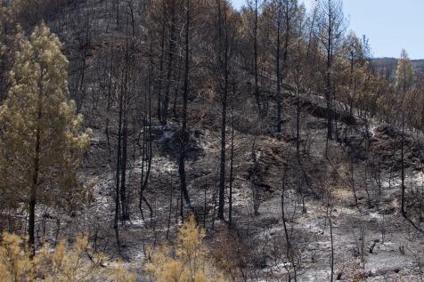 charred hill