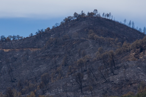 burnt ridgetop