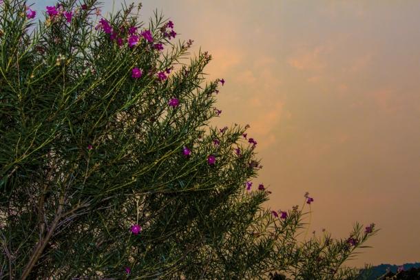 fire sky ~d nelson