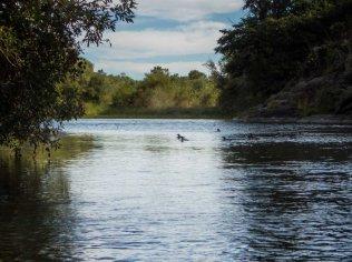 fowl paddling