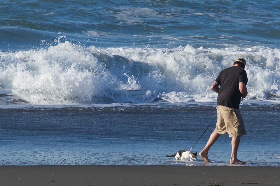 Y R U walking Me here, meowww? ~d nelson