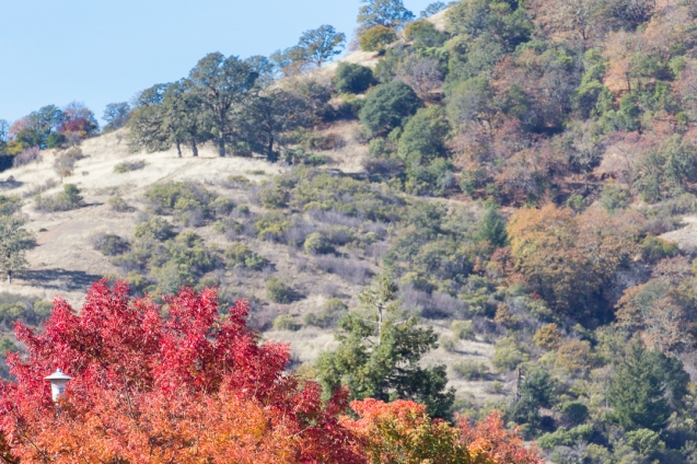 Fall CA hillside
