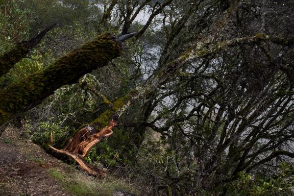 distressed_trees-1