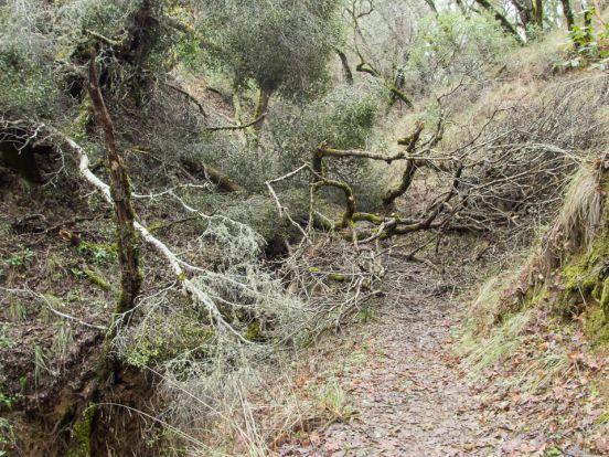 distressed_trees-10
