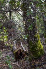 distressed_trees-2