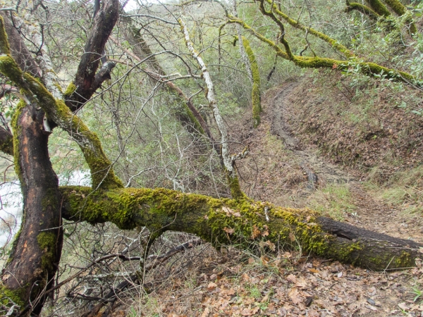 distressed_trees-8