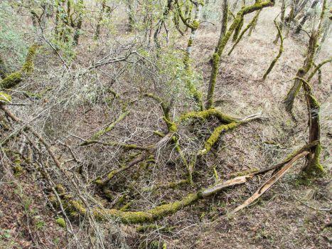 distressed_trees-9