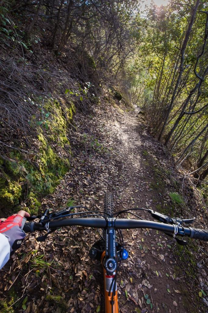 joyful down the trail ~d nelson