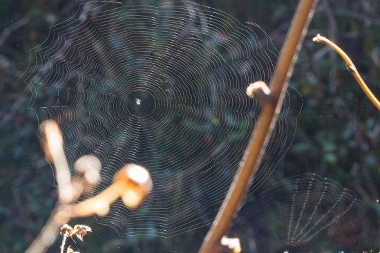 web in wind