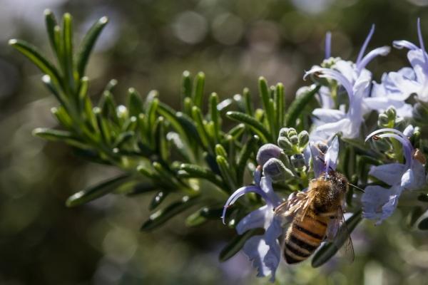 free stuff bee