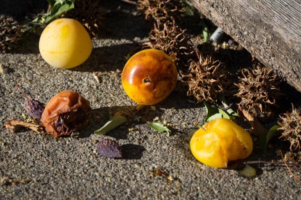 fallen fruit ~d nelson
