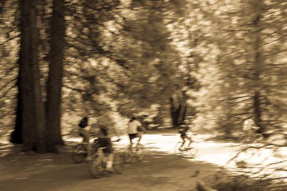 family biking fun