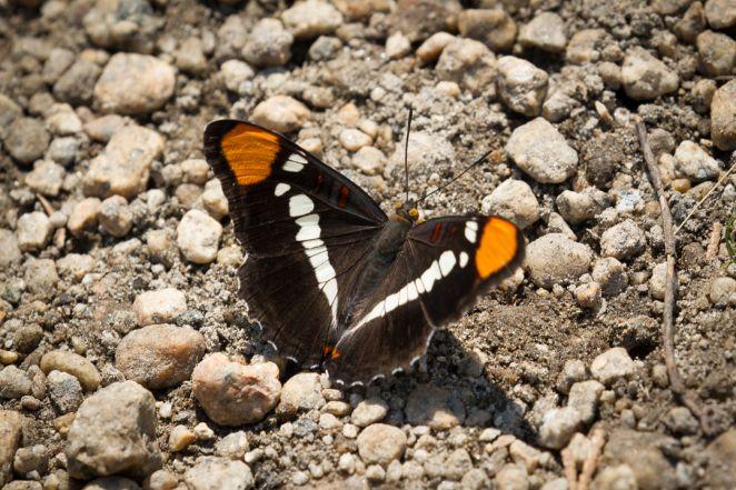 posing mariposa