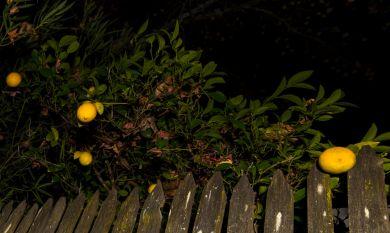lemon ornaments