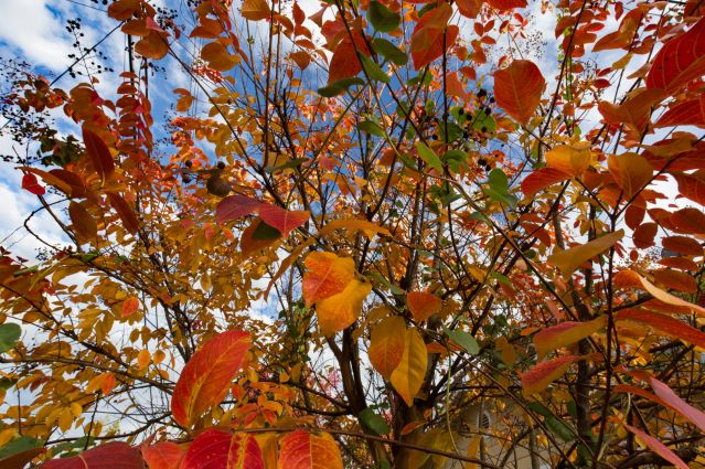 leaf ormaments