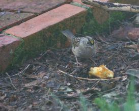 snackin' birdy