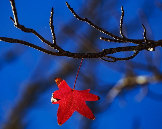 best season last leaf
