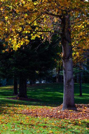 best season park