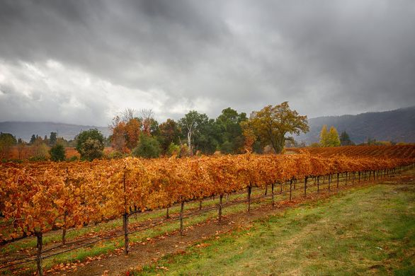 november vineyard rains
