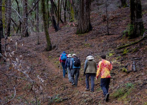 dark forest steps together