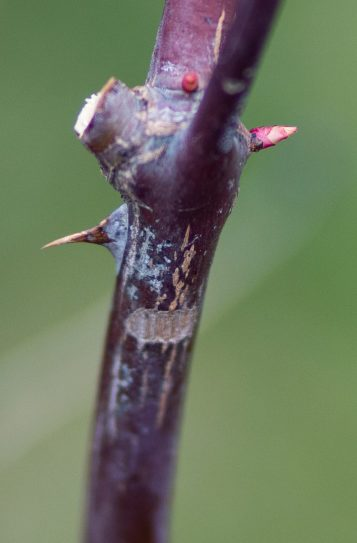 Feb 1 bud 2 (click to enlarge)