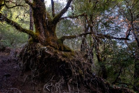 revealing mysterious roots (click to enlarge)