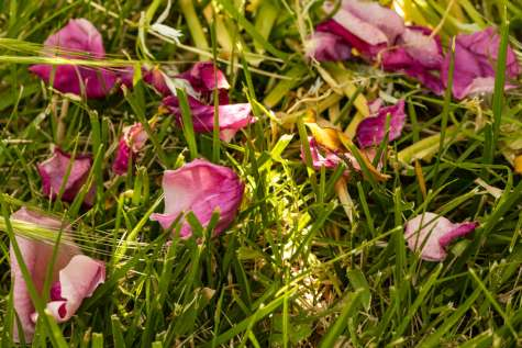 petals luminescence 8 (click to enlarge)