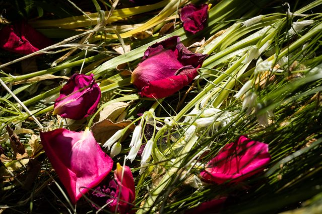 petals luminescence 4