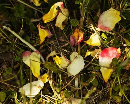 petals luminescence 5