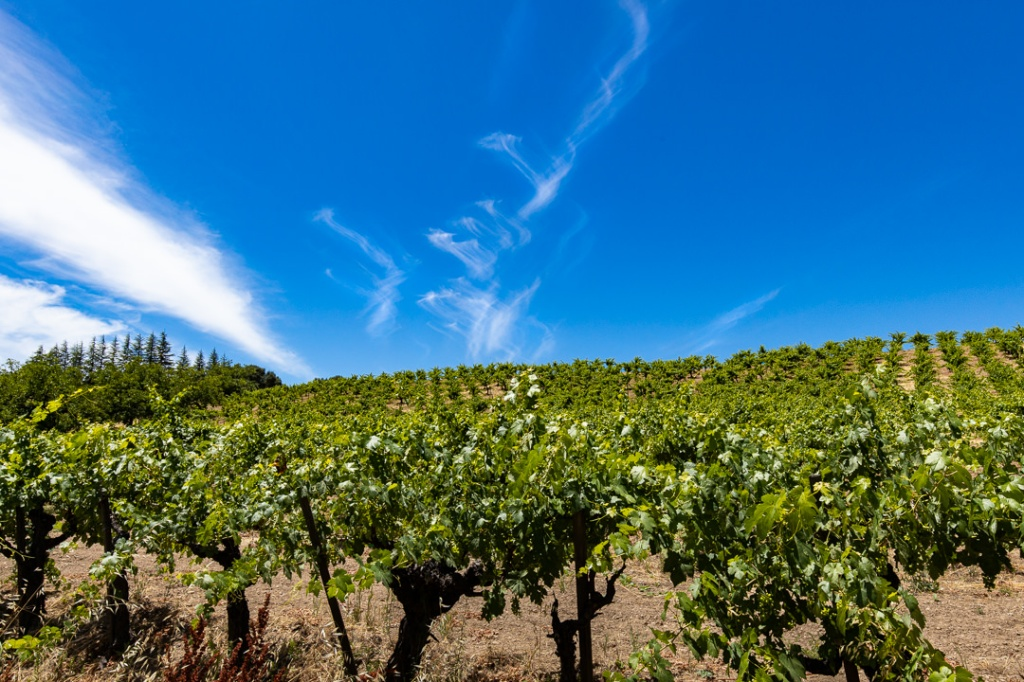 vineyard, forest, sky